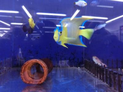 海水魚 063