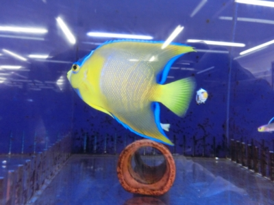 海水魚 064