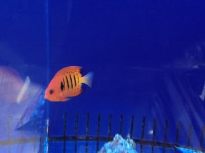 海水魚 065