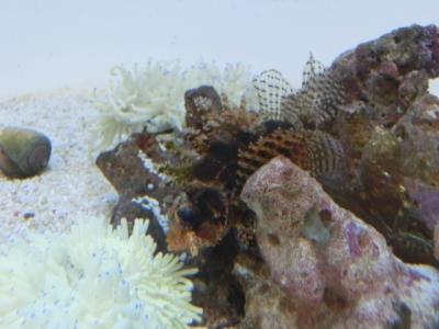 海水魚 066