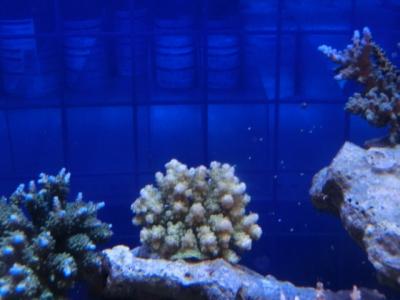 海水魚 069