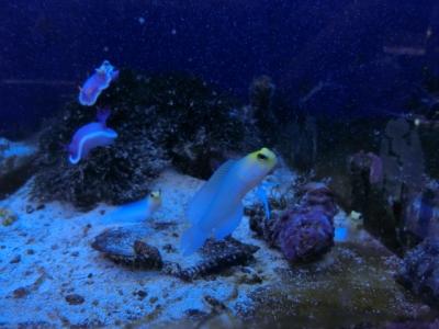 海水魚 076