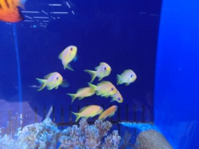 海水魚 072