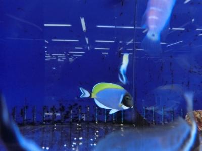 海水魚 075