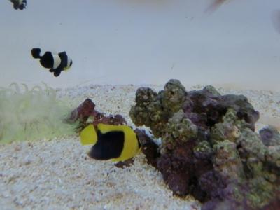海水魚 078