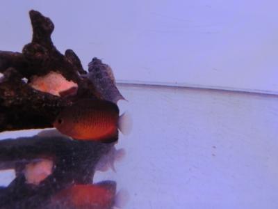 海水魚 079