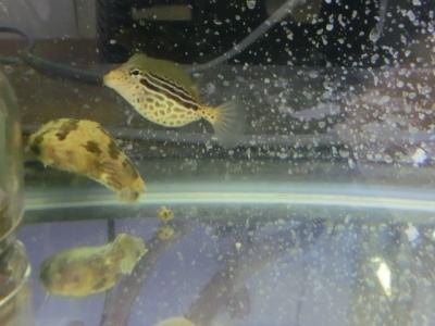 海水魚 094