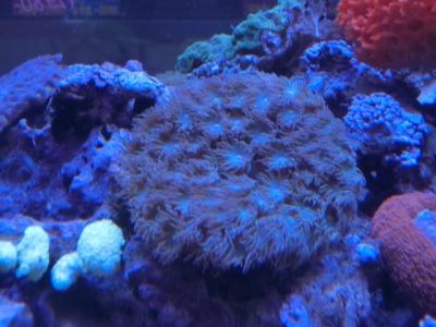 海水魚 097