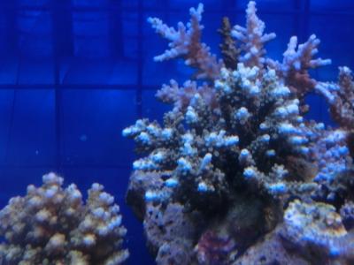 海水魚 099