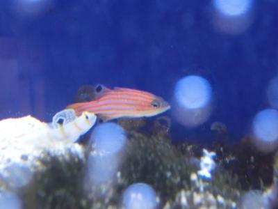 海水魚 100