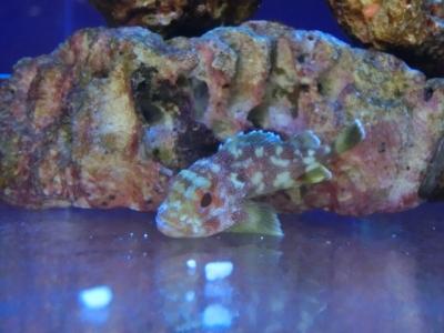 海水魚 106