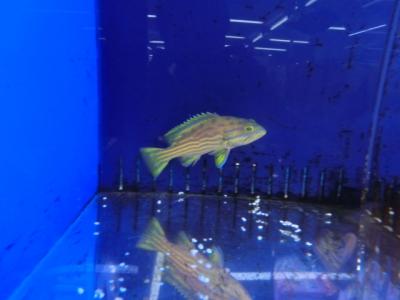 海水魚 102