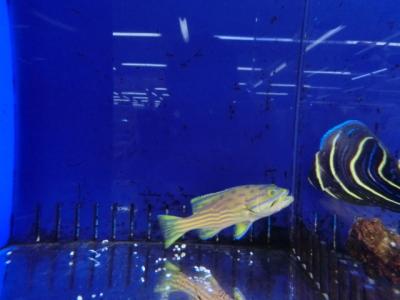 海水魚 103