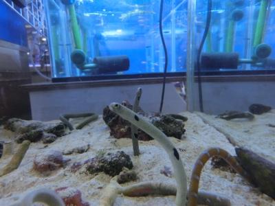 海水魚 107
