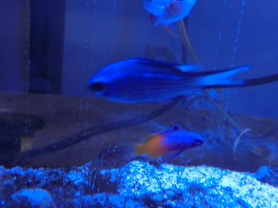 海水魚 109