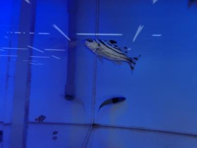 海水魚 110