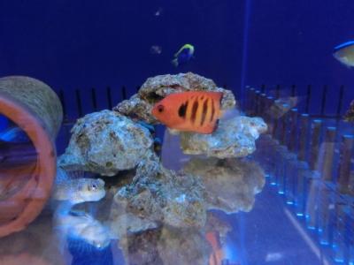 海水魚 116