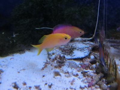 海水魚 115