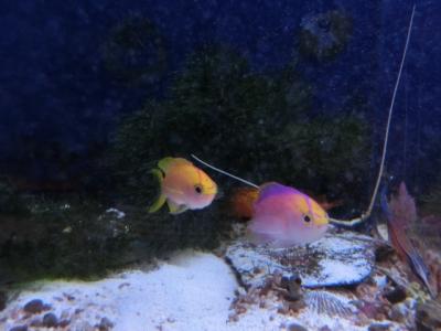 海水魚 117