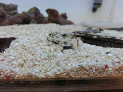 海水魚 118