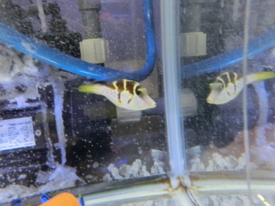 海水魚 119