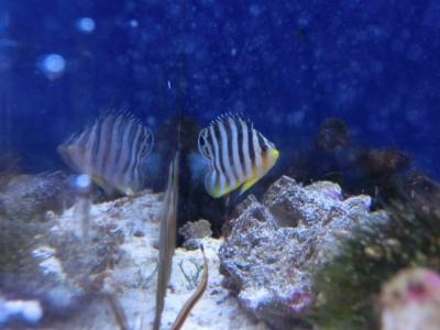 海水魚 120