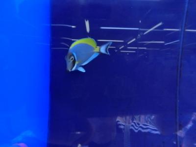 海水魚 121