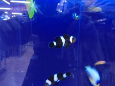 海水魚 123