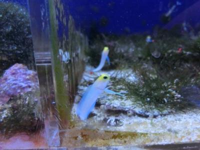 海水魚 124