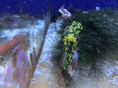 海水魚 148