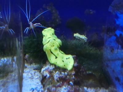 海水魚 147