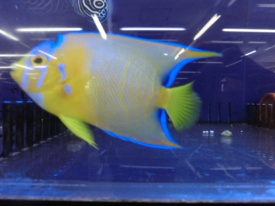 海水魚 149