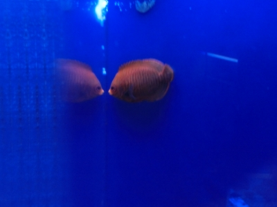 海水魚 150