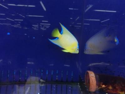 海水魚 151