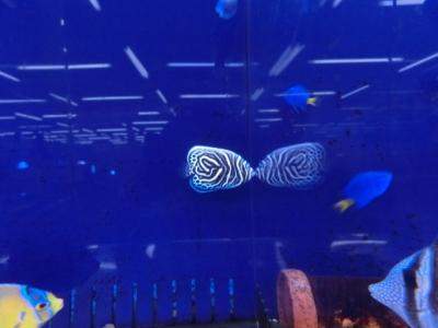 海水魚 157