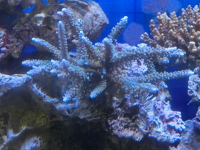 海水魚 162