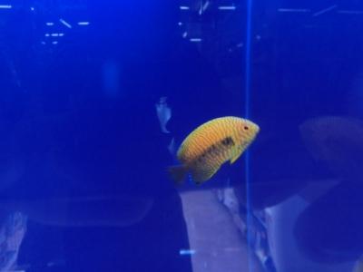 海水魚 164