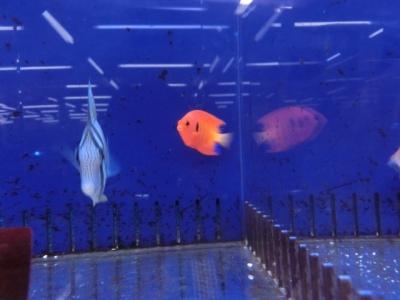 海水魚 165
