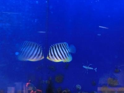 海水魚 173