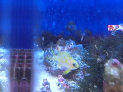 海水魚 170