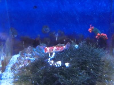 海水魚 171