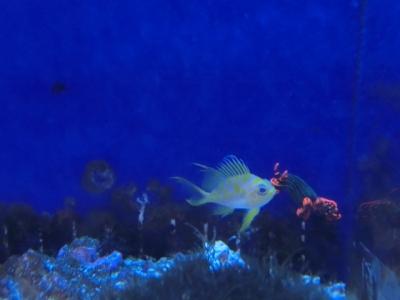 海水魚 172