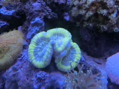 海水魚 174