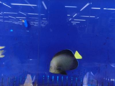 海水魚 180