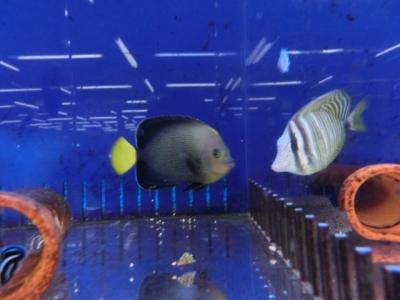 海水魚 178