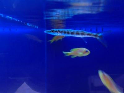 海水魚 179