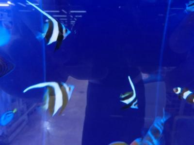 海水魚 184