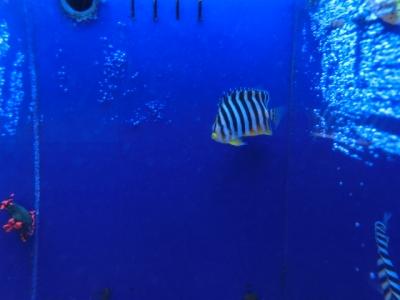 海水魚 181