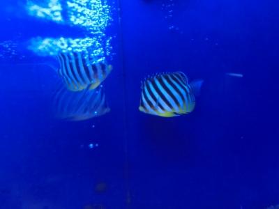 海水魚 183