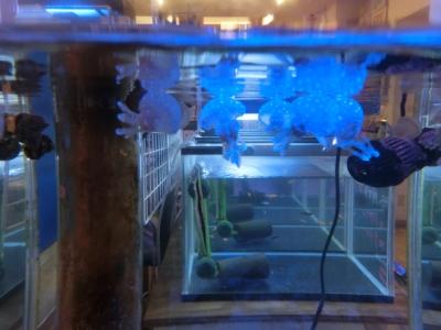 海水魚 189